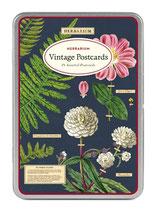 Herbarium  Postkartenset von Cavallini Papers