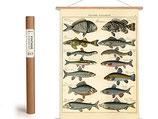 """Vintage Poster Set mit Holzleisten (Rahmen) und Schnur zum Aufhängen, Motiv """"Fische"""" (von Cavallini)"""