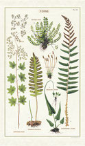 Ferns - Farne Geschirrtuch (Cavallini Papers & Co.)