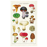 Vintage Pilze Geschirrtuch (Cavallini Papers & Co.)