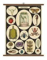 """Vintage Poster Set extra groß mit Holzleisten (Rahmen) und Schnur zum Aufhängen,  Motiv """"Spezien, Lebensarten"""""""