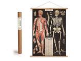 """Vintage Poster Set mit Holzleisten (Rahmen) und Schnur zum Aufhängen, Motiv """"Anatomie - Skelett"""" (von Cavallini)"""