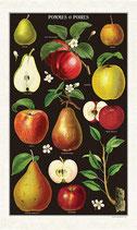 Äpfel und Birnen Geschirrtuch (Cavallini Papers & Co.)