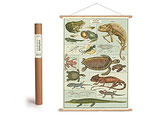 """Vintage Poster Set mit Holzleisten (Rahmen) und Schnur zum Aufhängen, Motiv """"Reptilien, Amphibien """" (von Cavallini)"""