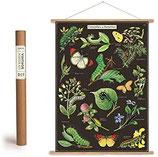 """Vintage Poster Set mit Holzleisten (Rahmen) und Schnur zum Aufhängen, Motiv """"Raupen & Schmetterlinge"""" (von Cavallini)"""