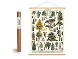 """Vintage Poster Set mit Holzleisten (Rahmen) und Schnur zum Aufhängen, Motiv """" Wald"""" (von Cavallini)"""