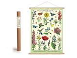"""Vintage Poster Set mit Holzleisten (Rahmen) und Schnur zum Aufhängen, Motiv """"Pollinator, Bestäuber"""" (von Cavallini)"""