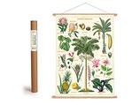 """Vintage Poster Set mit Holzleisten (Rahmen) und Schnur zum Aufhängen, Motiv """"Tropische Pflanzen"""" (von Cavallini)"""