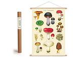 """Vintage Poster Set mit Holzleisten (Rahmen) und Schnur zum Aufhängen, Motiv """" Pilze"""" (von Cavallini)"""