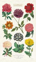 Botanik - Blumen  Geschirrtuch (Cavallini Papers & Co.)