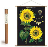 """Vintage Poster Set mit Holzleisten (Rahmen) und Schnur zum Aufhängen, Motiv """" Sonnenblume"""" (von Cavallini)"""