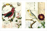 Notebook Set of 2  Birds - Vögel (Cavallini)