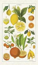 Vintage Zitrusfrüchte - Citrus Geschirrtuch (Cavallini Papers & Co.)