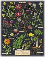 """""""Herbarium- Blumen"""" Cavallini Vintage Puzzle"""