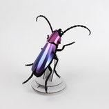 Rosalia Käfer violett metallic