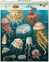 """""""Jellyfish - Quallen """" Cavallini Vintage Puzzle"""