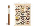"""Vintage Poster Set mit Holzleisten (Rahmen) und Schnur zum Aufhängen, Motiv """"Schmetterlinge"""" (von Cavallini)"""