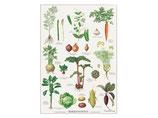 Koustrup & Co // Poster Gemüsegarten