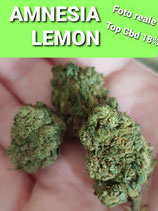 amnesia lemon - TOP CBD - indoor