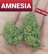 amnesia- INDOOR
