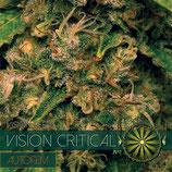 VISION CRITICAL AUTOFIORENTE - VISION SEEDS