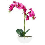 Orchidee, H 65cm