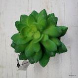 Minipflänzli grün