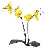 Orchidee klein