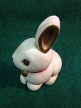 Thun coniglio