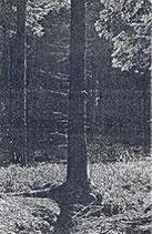 """Inmitten des Waldes - """"Promo '04"""""""