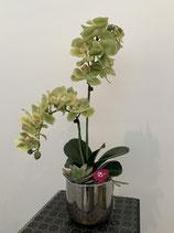 Orchideen Silbertopf Nr 106