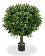 Outdoor Pflanze Buchsbaum