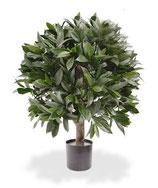 Outdoor Pflanze Lorbeerkugel
