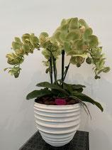 Orchideenvase Keramik weiss Nr 105