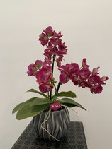 Orchideen Purple in anthrazit Keramiktopf Nr 112