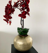 Gold Red Orchid  Nr 100