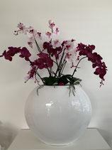 XXL Orchideen-Arrangement Purple/Rosa Nr 122