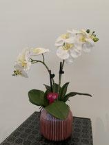 Weisse Orchideen in gerillten Keramik Topf Nr 117