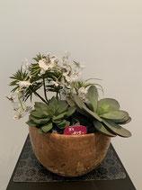 Sukkulenten Holzschale mit Dancing Orchideen Nr 129