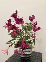 Clematis Blüten in gewellten Silbertopf Nr 113