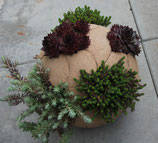 Tonkugel bepflanzt (oder zum selber bepflanzen)