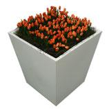 CONIC wit middel 75cm met oranje tulpen