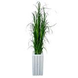 Plantenzuil wood met siergras 150cm