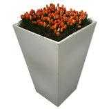 CONIC wit/zwart hoog 110cm met oranje tulpen