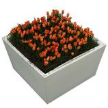 CONIC wit laag 40cm met oranje tulpen