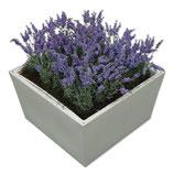 CONIC wit laag 40cm met lavendel