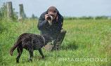 Hundefotografie - Hunde in Bewegung und im Portrait