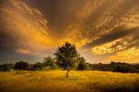 Teresa´s Tree