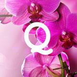 Orchidea e legni speziati
