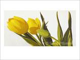 Tulpen No 1, Kunstkarte